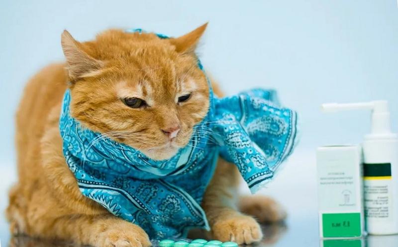 кашель у кошки приступами