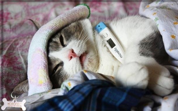 кошка кашляет как будто подавилась