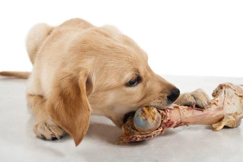 можно ли собакам куриные кости