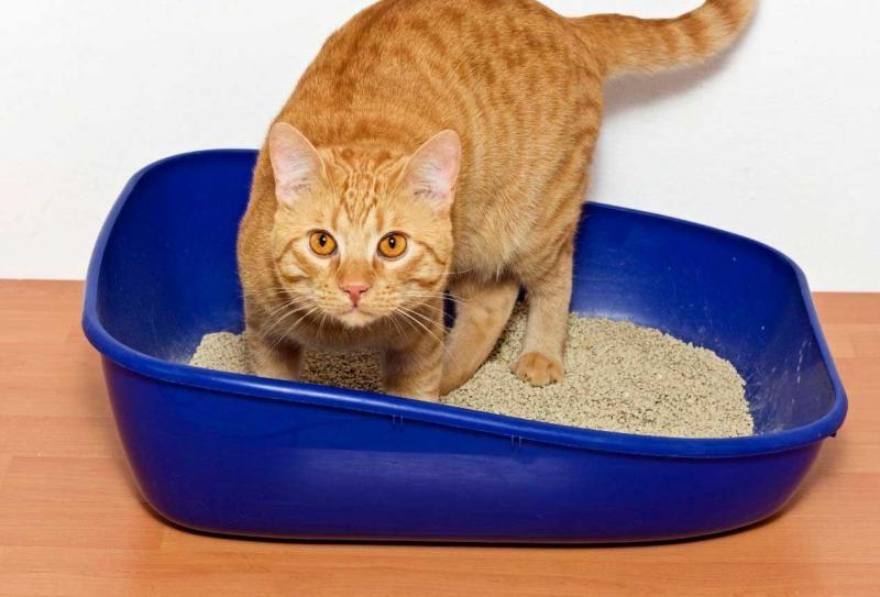 кот часто ходит в туалет по маленькому