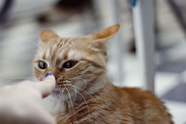 кот чихает кровью