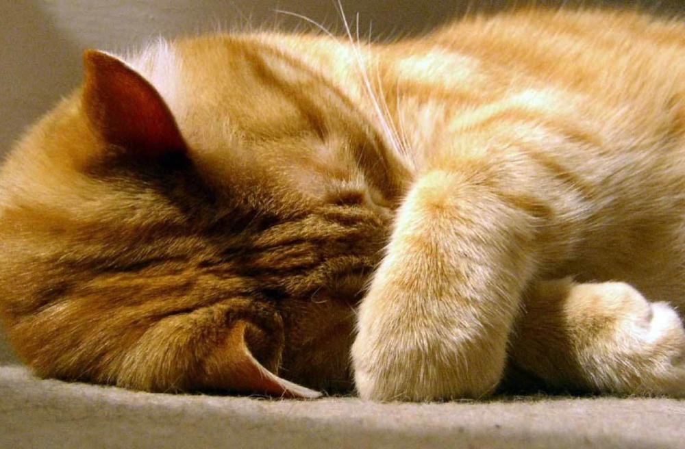 кошка чихает много раз подряд