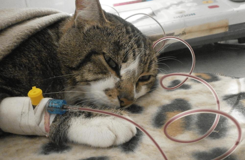 у кошки кровяные выделения что делать