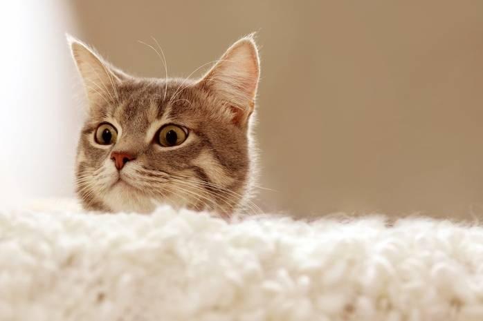 кот не ходит в туалет по маленькому