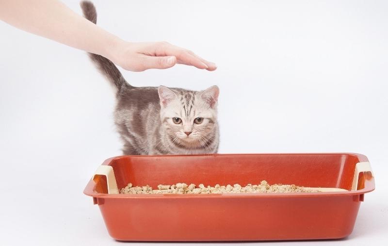 заставить кота пописать