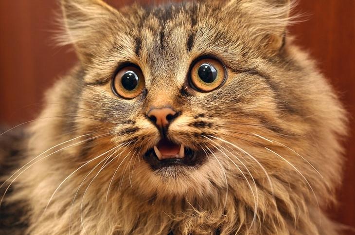 кошка тяжело дышит животом и не ест