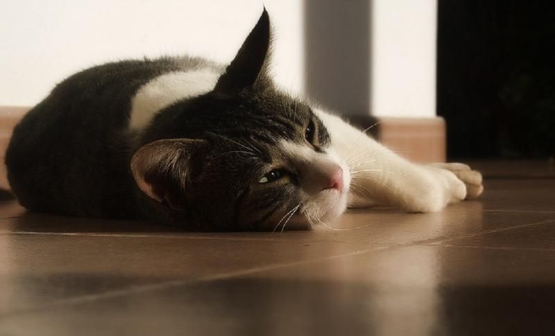 признаки глистной инвазии у кошек
