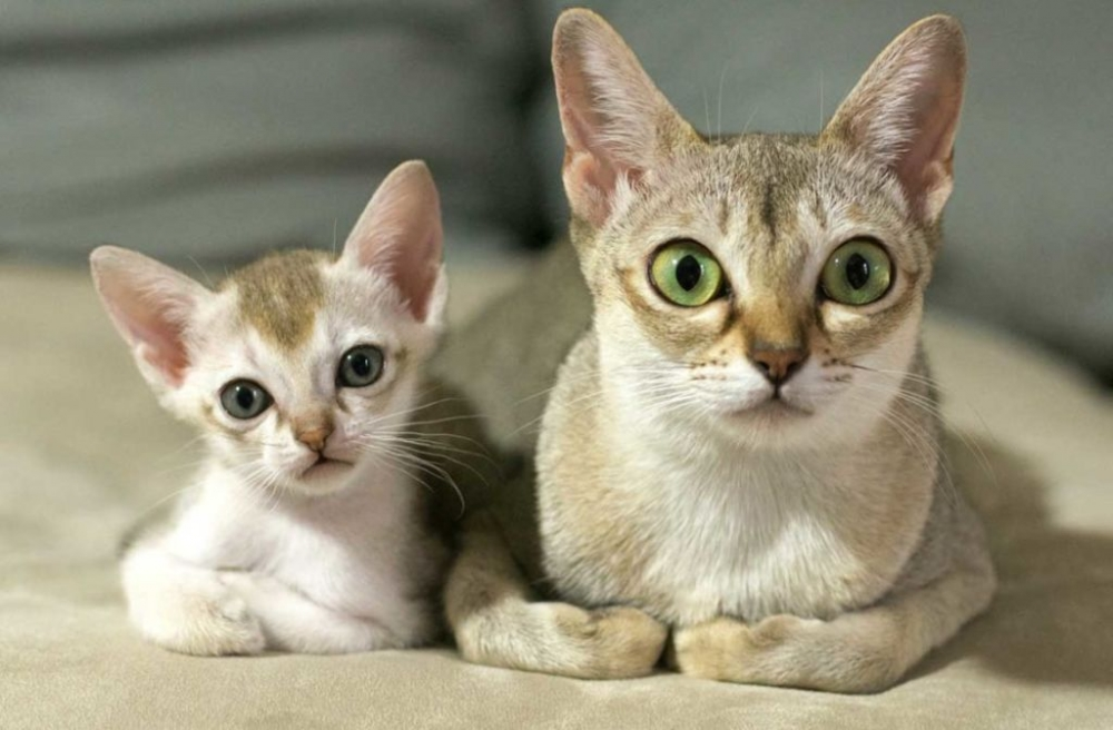 гельминты у кошек симптомы