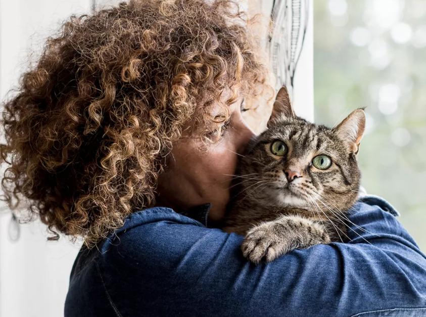 вирус лейкемии кошек