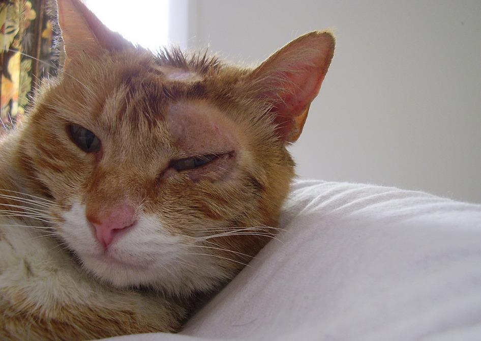 спрей от лишая для кошек