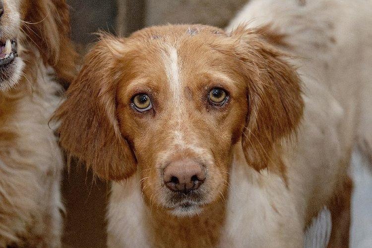 стригущий лишай у собаки лечение
