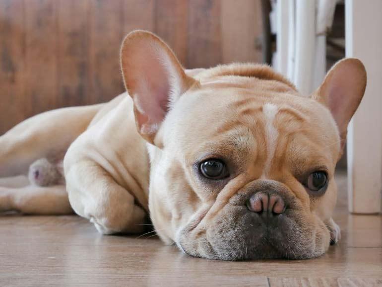 лишай у собаки фото начальная стадия