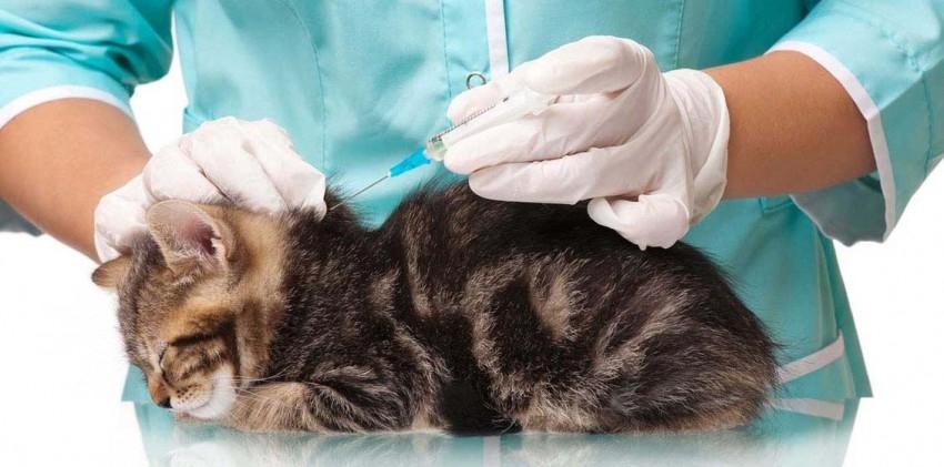 лечение лямблиоза у кошек
