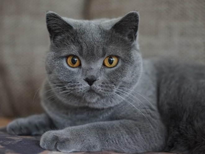 мастопатия у кошки лечение в домашних условиях