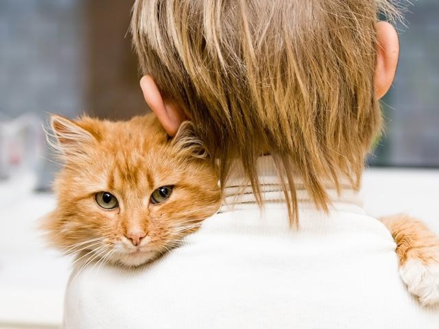 микроспория у кошек лечение
