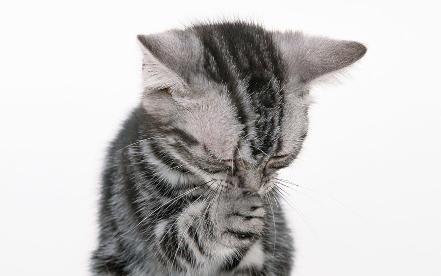 у кота не дышит нос