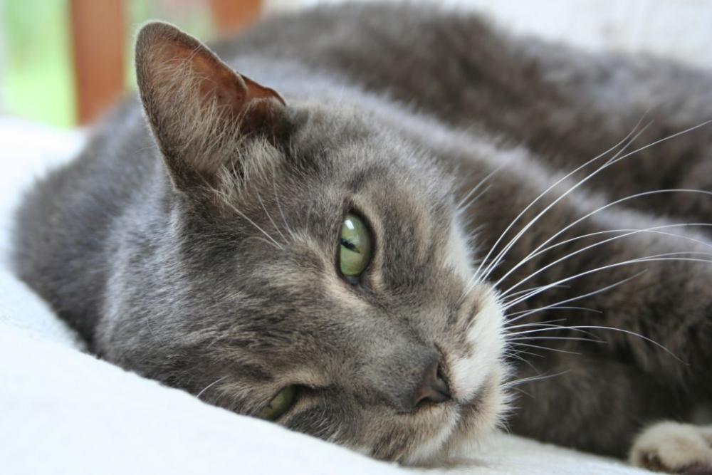 у котенка сопли и чихает что делать
