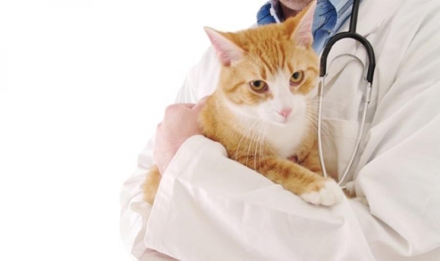 у кота заложен нос и слезятся глаза