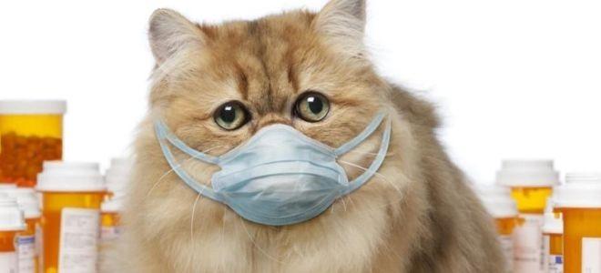 насморк у котенка лечение в домашних условиях