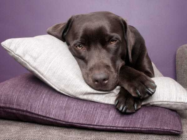 как измерить температуру у собаки