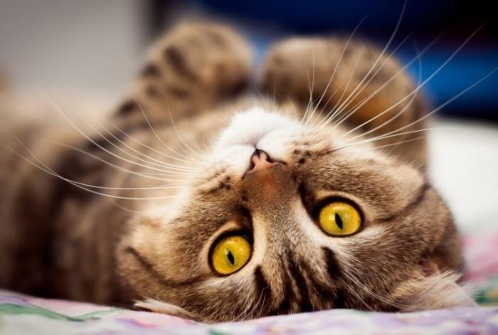 омж у кошки