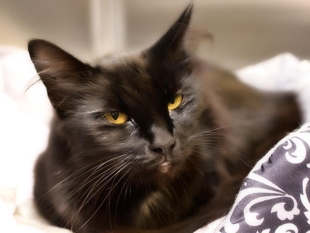 отек легких у кошки можно ли вылечить