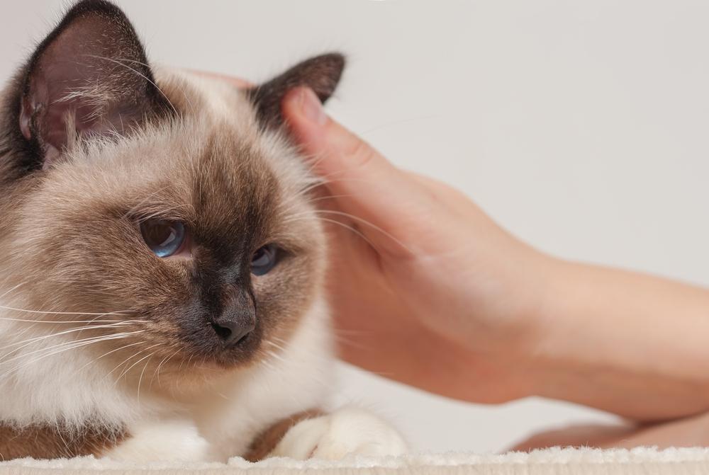 ушные капли для кошек при отите