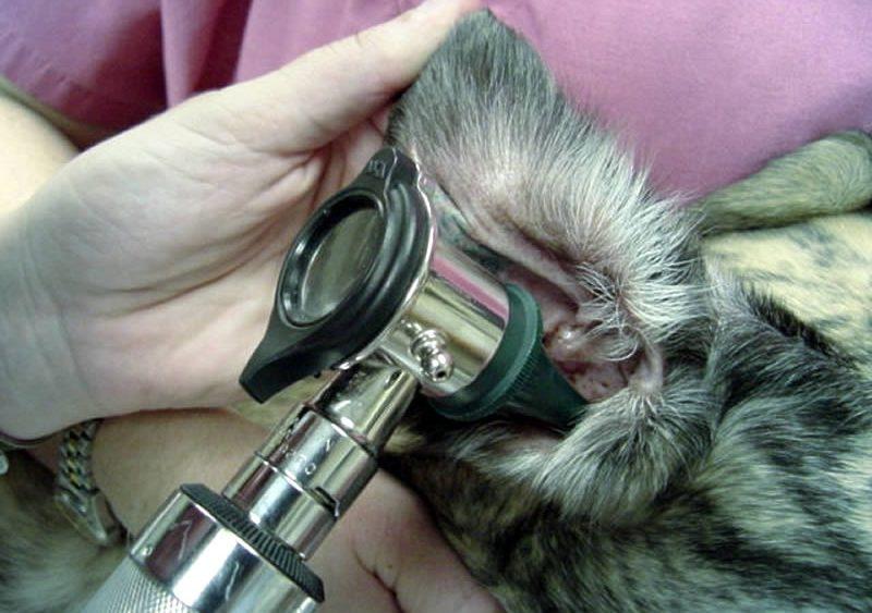 ушные капли для собак от отита