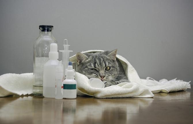 панкреатит у кошек симптомы и лечение