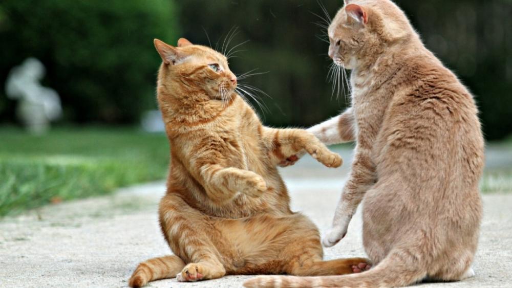 параанальные железы у кошек чистка видео
