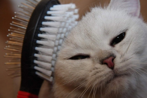 перхоть у кошки на спине около хвоста