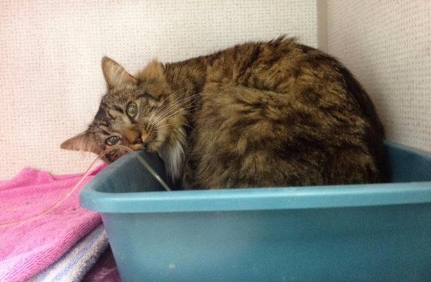 почечная недостаточность у кошек симптомы лечение