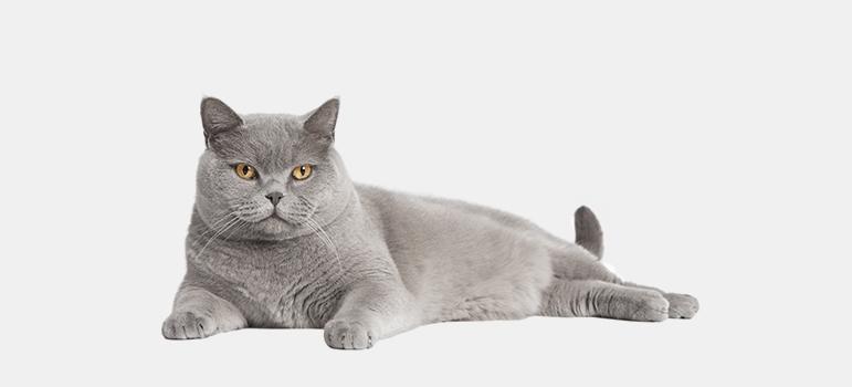 хпн у кошек лечение по стадиям