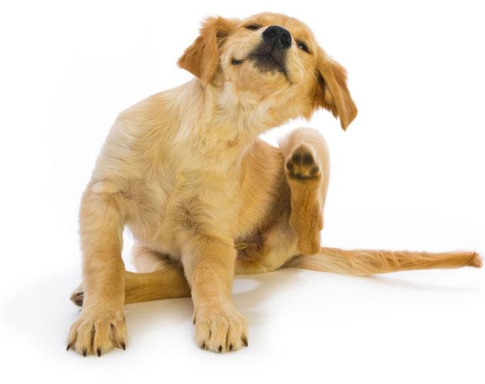 у собаки выпадает шерсть и чешется