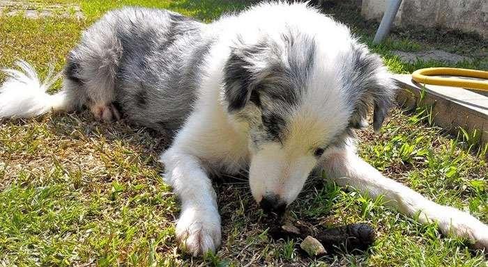почему собака ест свой кал