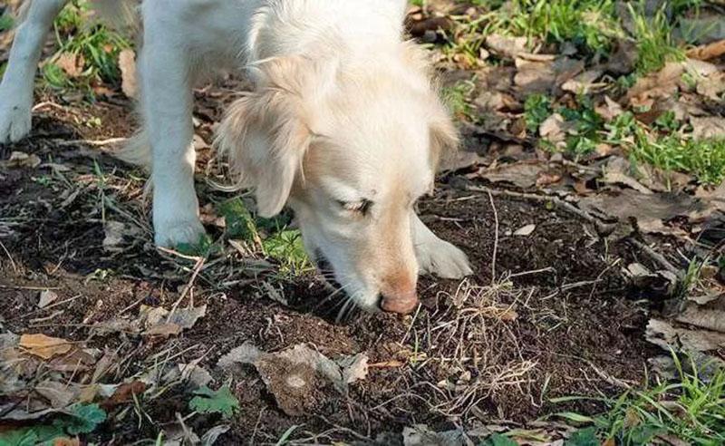 почему собаки едят кошачий помет