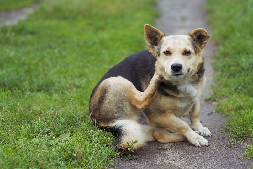 собака ездит на попе причины