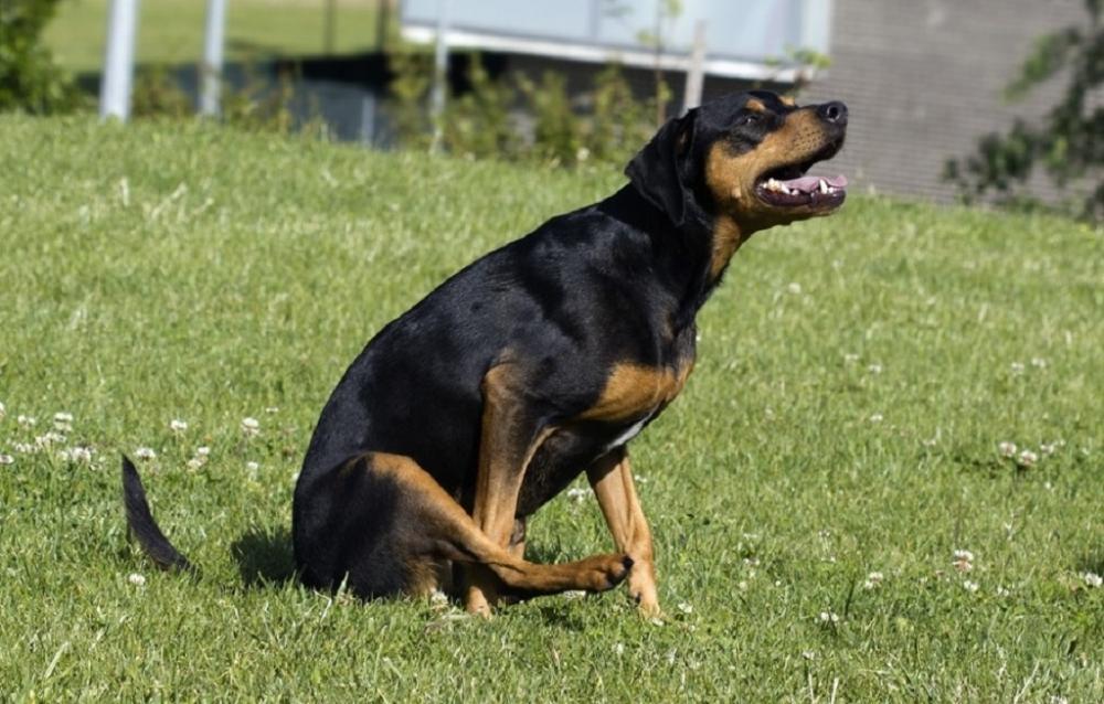 почему собака ездит по полу на попе