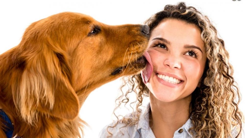 собака вылизывает хозяина