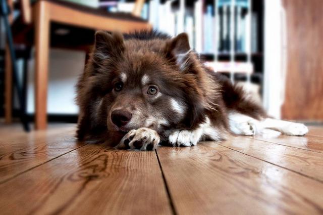 неприятный запах изо рта у собаки
