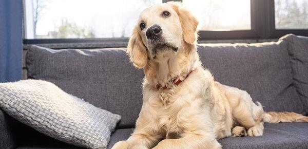 перхоть у собаки причины и лечение