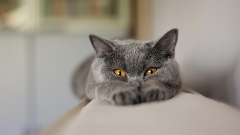 как выглядит подкожный клещ у кошек