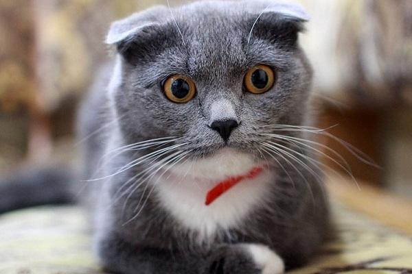 половая зрелость у кошек
