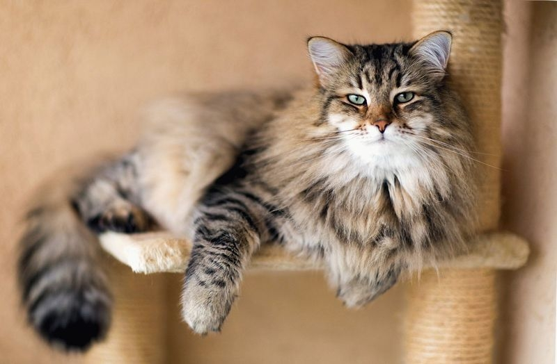 преднизолон коту