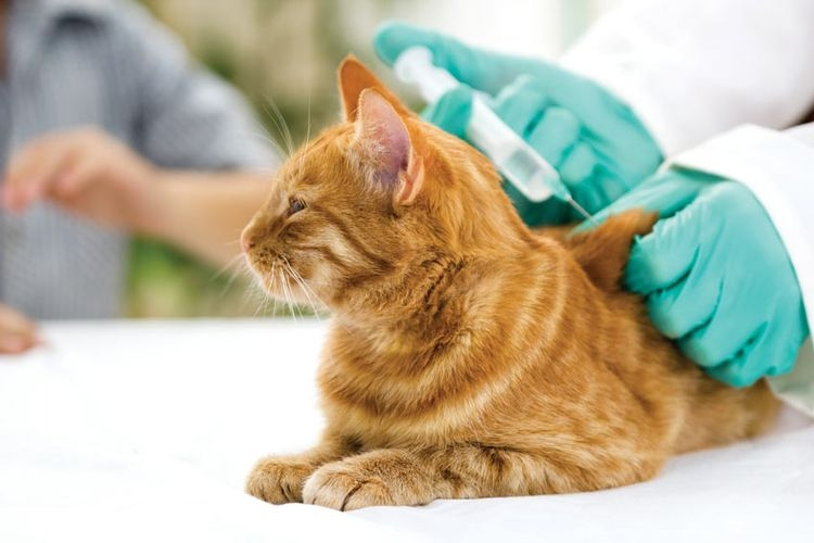 сколько стоит прививка от бешенства кошке