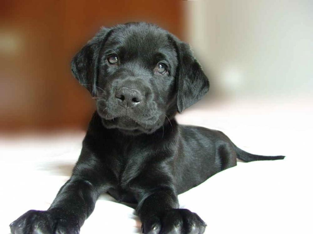 комплексная прививка для собак