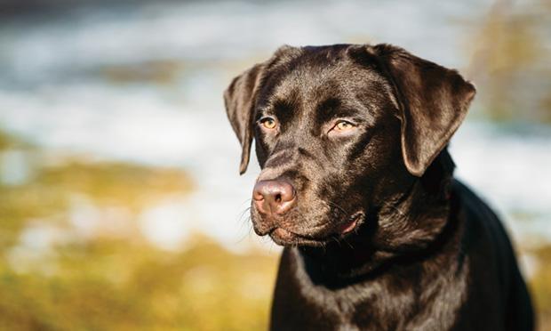 отравление у собаки первая помощь