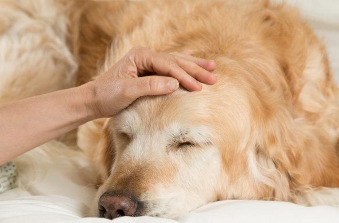 симптомы отравления у собак ядом