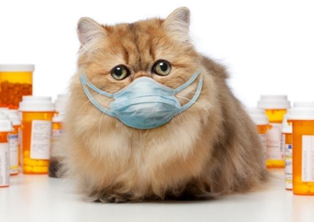 простуда у кошек симптомы и лечение