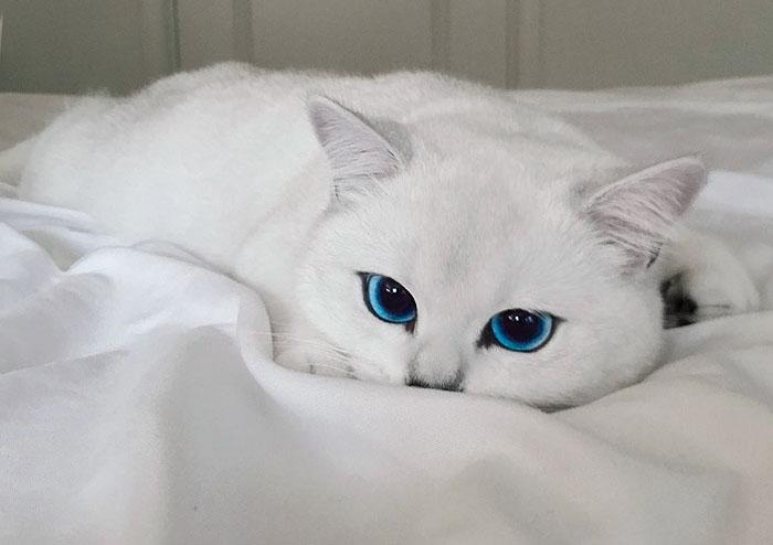 щелочная фосфатаза повышена причины у кошек